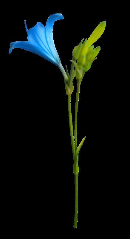Nautical clipart flower. Xcen am el png