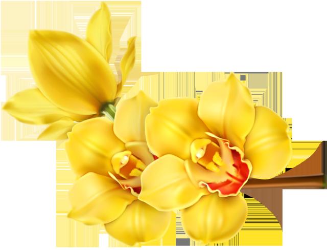 Floral clipart orchid. Flower clip art net