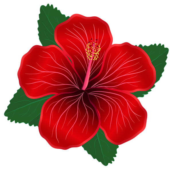Poppy clipart three. Red flower png image