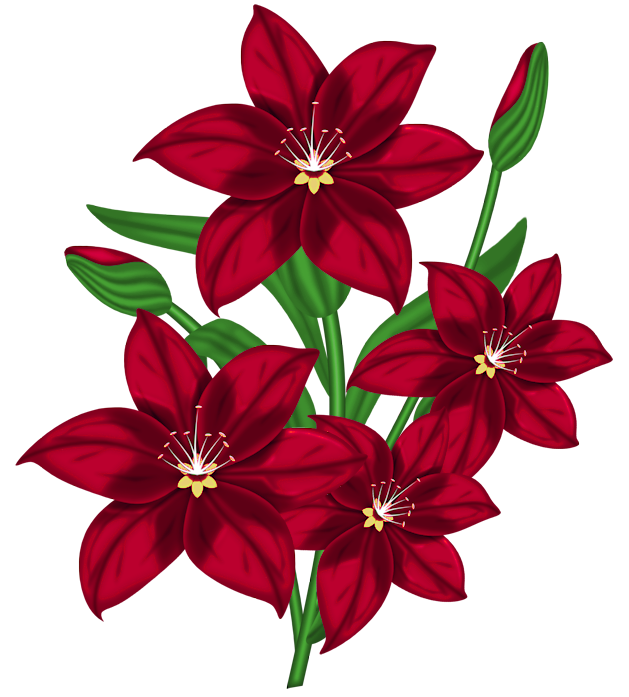 Nice red gallery yopriceville. Flower clipart png