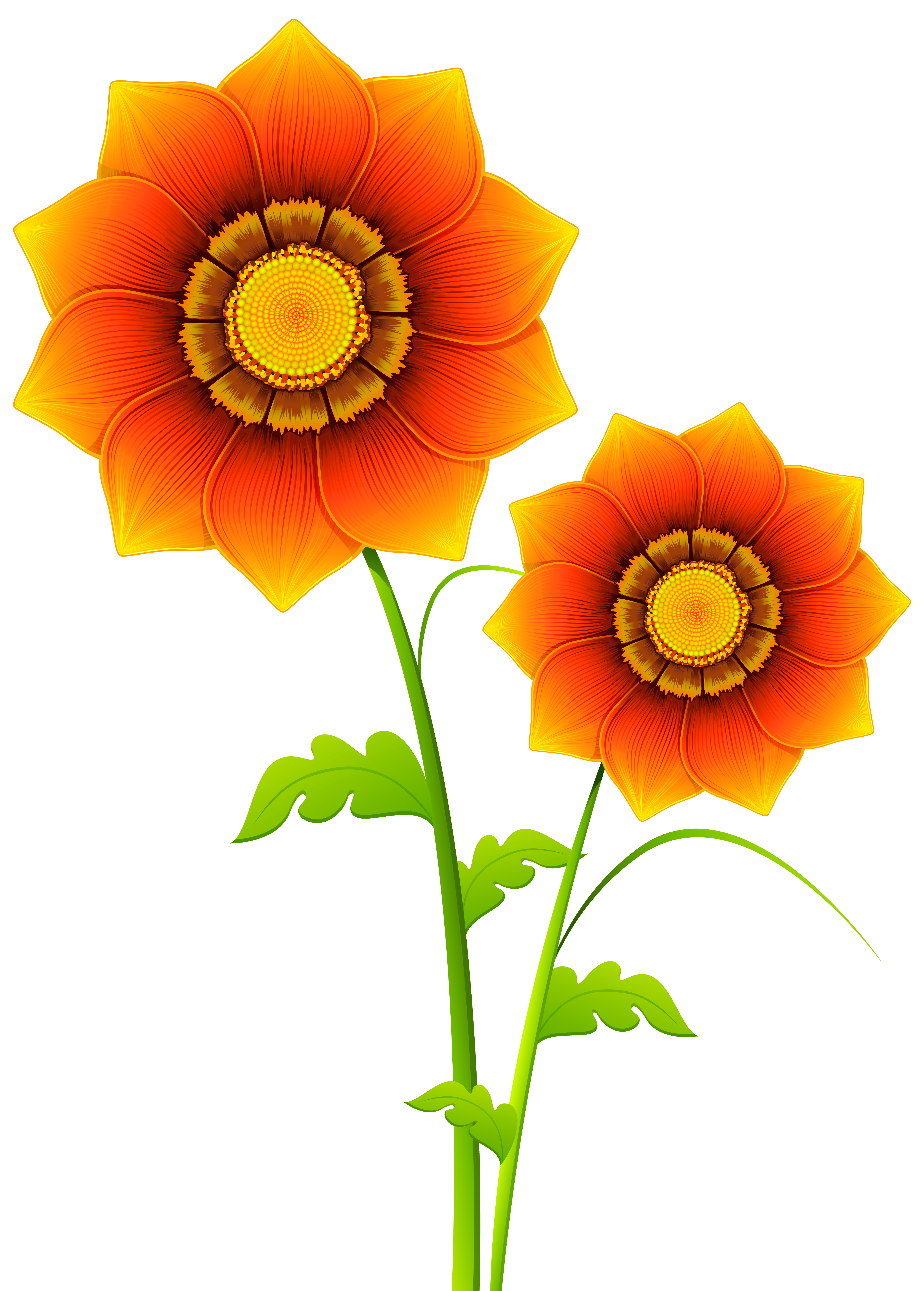 collection of flower. Plant clipart transparent background