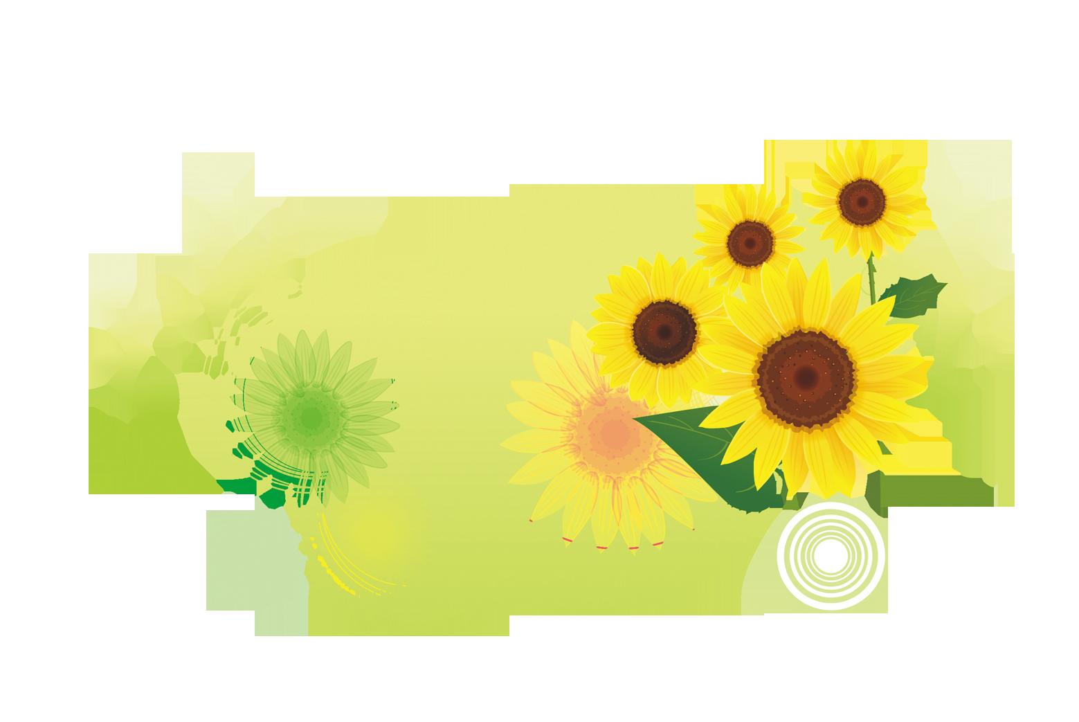 Download common sunflower illustration. Floral clipart translucent