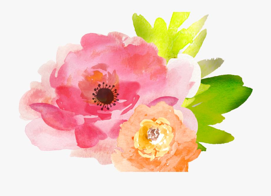 Floral clipart transparent background.  free watercolor flower