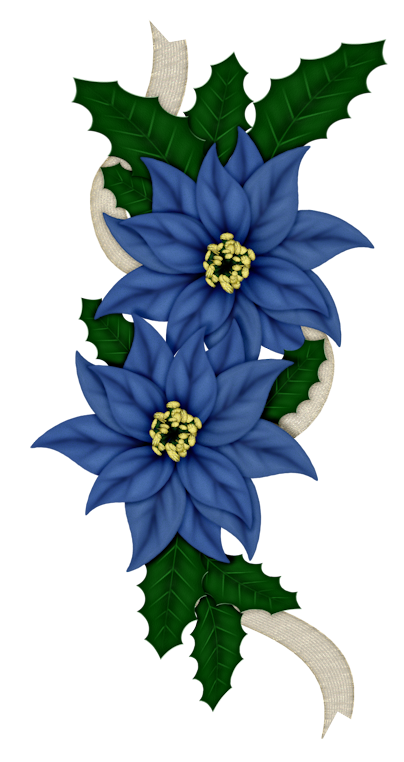 Poinsettias blue