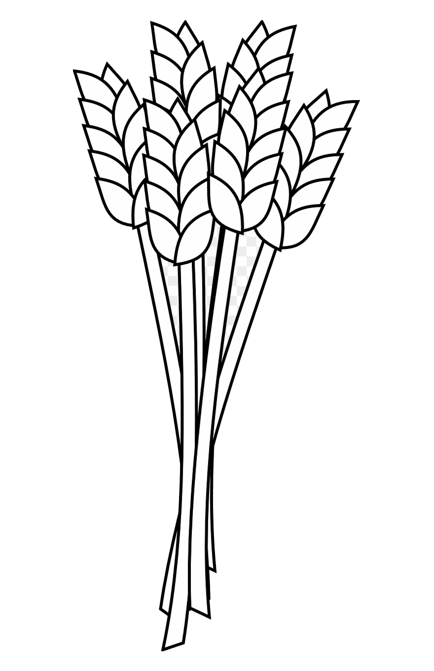 Wheat clipart outline. Freeuse stock flour coloring