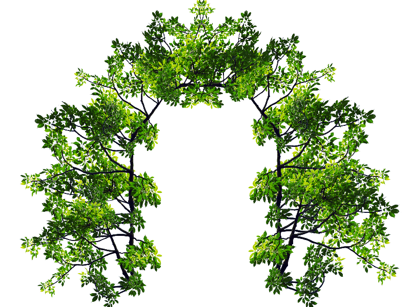 With green leaves and. Flower arch png