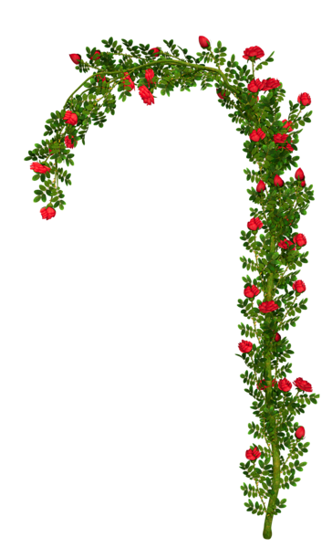 Rosebush element clipart picture. Flower arch png