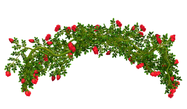 Flower arch png.  rose clipart huge