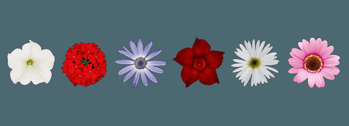 About suntory genetics mnp. Flower banner png
