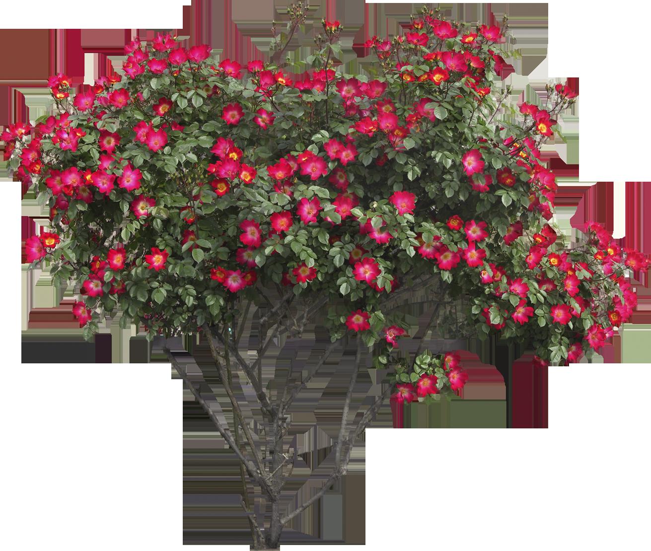 Flower bed png. Bushes images free download