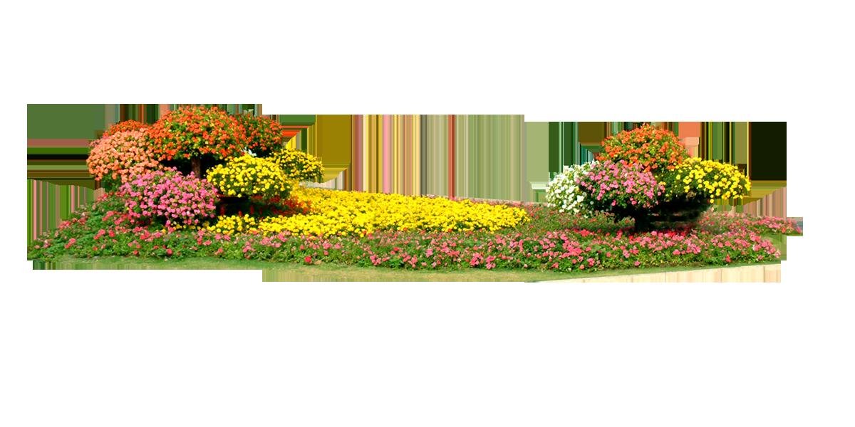 Flower bed png. Floral design rectangle transprent