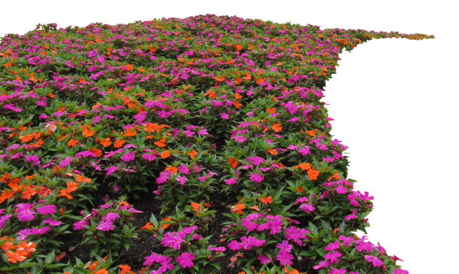 Flower bed png. Clear cut img by