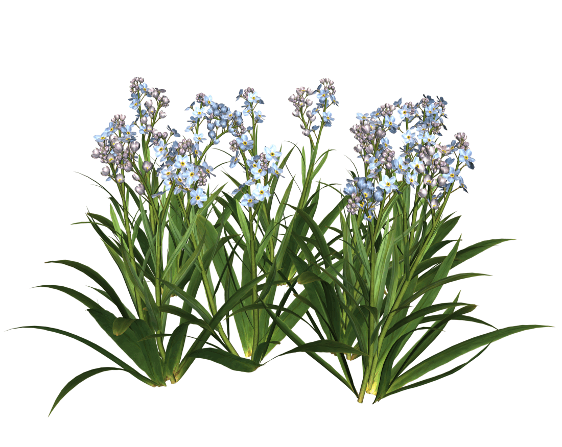 Flower bed png.  garden flowers for