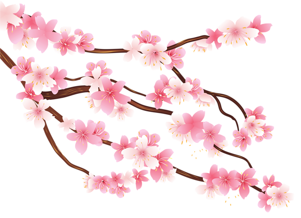 Flower branch png. Pink spring clipart image
