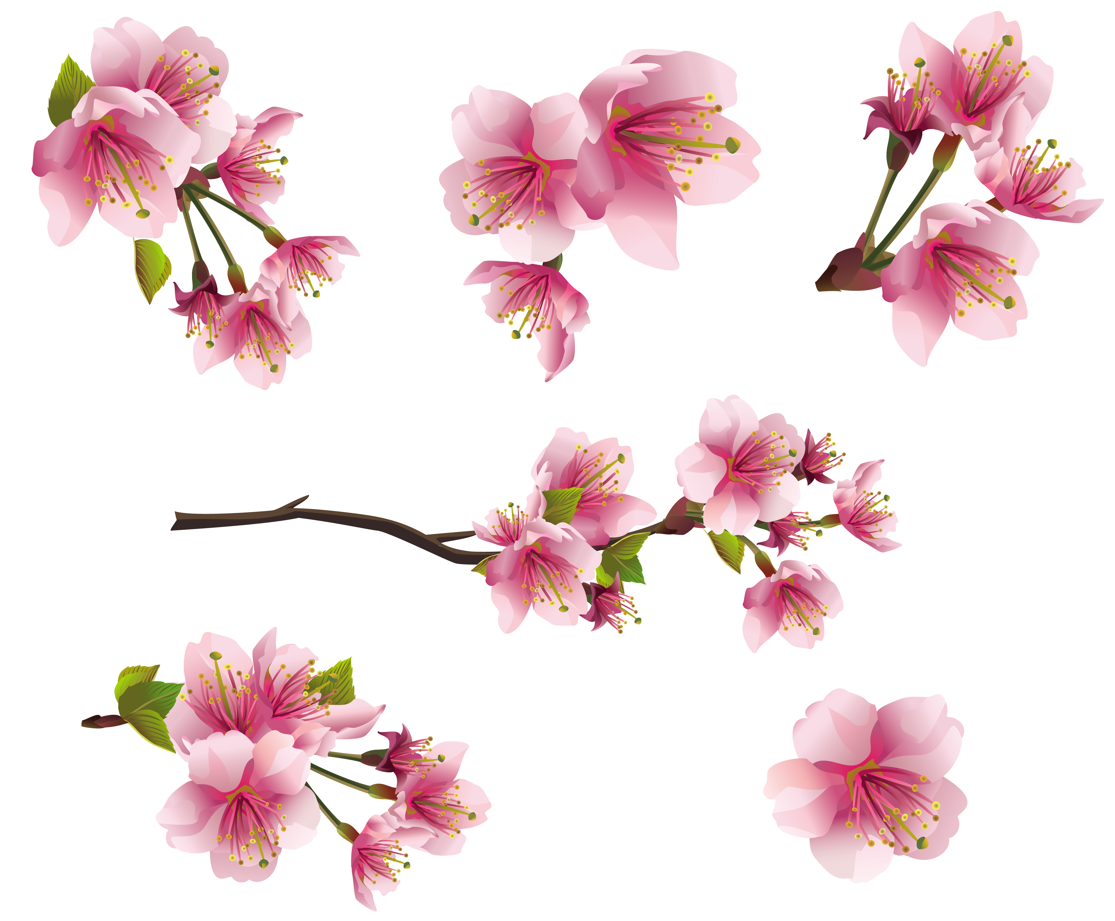 Flower branch png. Tiny flowers transparent images