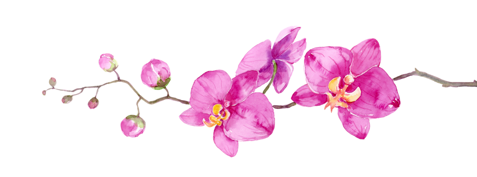 Flower branch png. Cut flowers petal floral