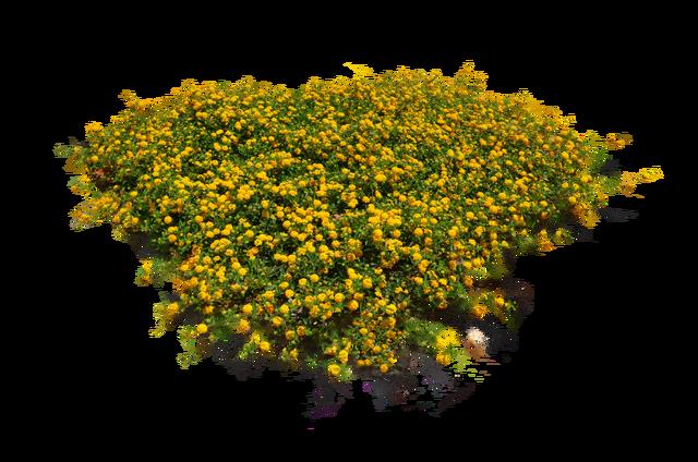 Flower bush png.  plants flowers images