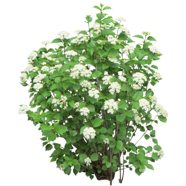 Flower bush png. With white flowers drzewa