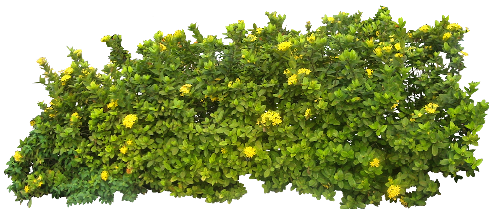 Images free download bush. Flower bushes png