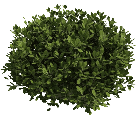 Shrub transparent images pluspng. Flower bushes png