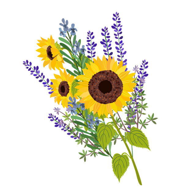 Floral vector png. Sun flower and psd