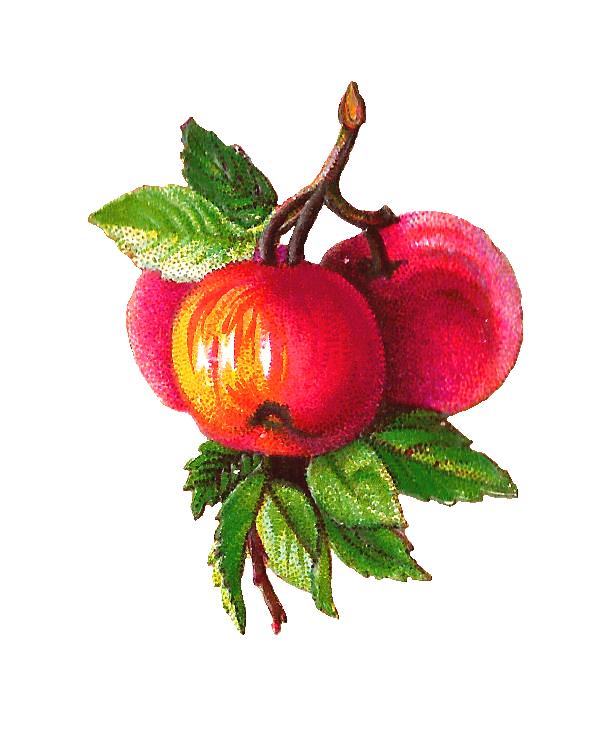 Apple and clip art. Grape clipart plum fruit