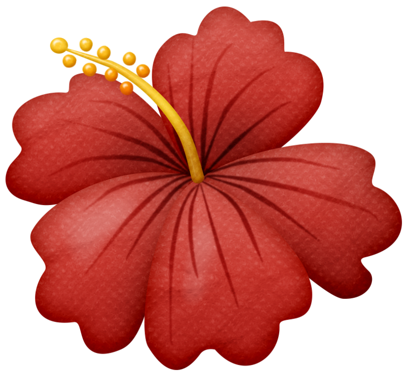 Flower clipart beach. Lliella gumamela png album