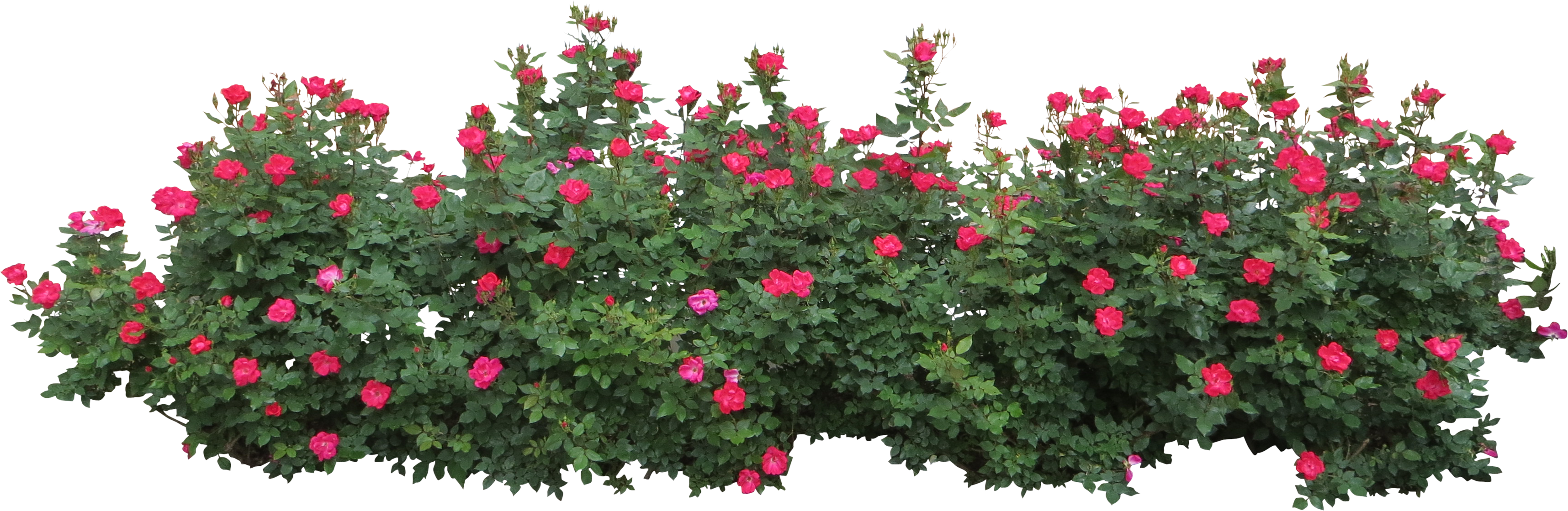 collection of clipart. Flower bush png