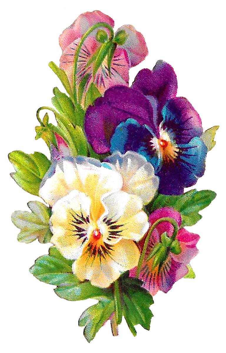 Flower clipart digital. Carolyn iott on twitter