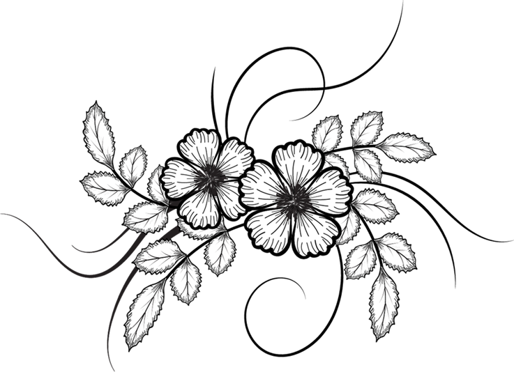 Flowers vector pinterest. Flower drawing png