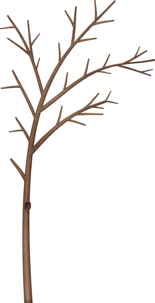Flower clipart feather. Kaagard littleforestwinter tree png