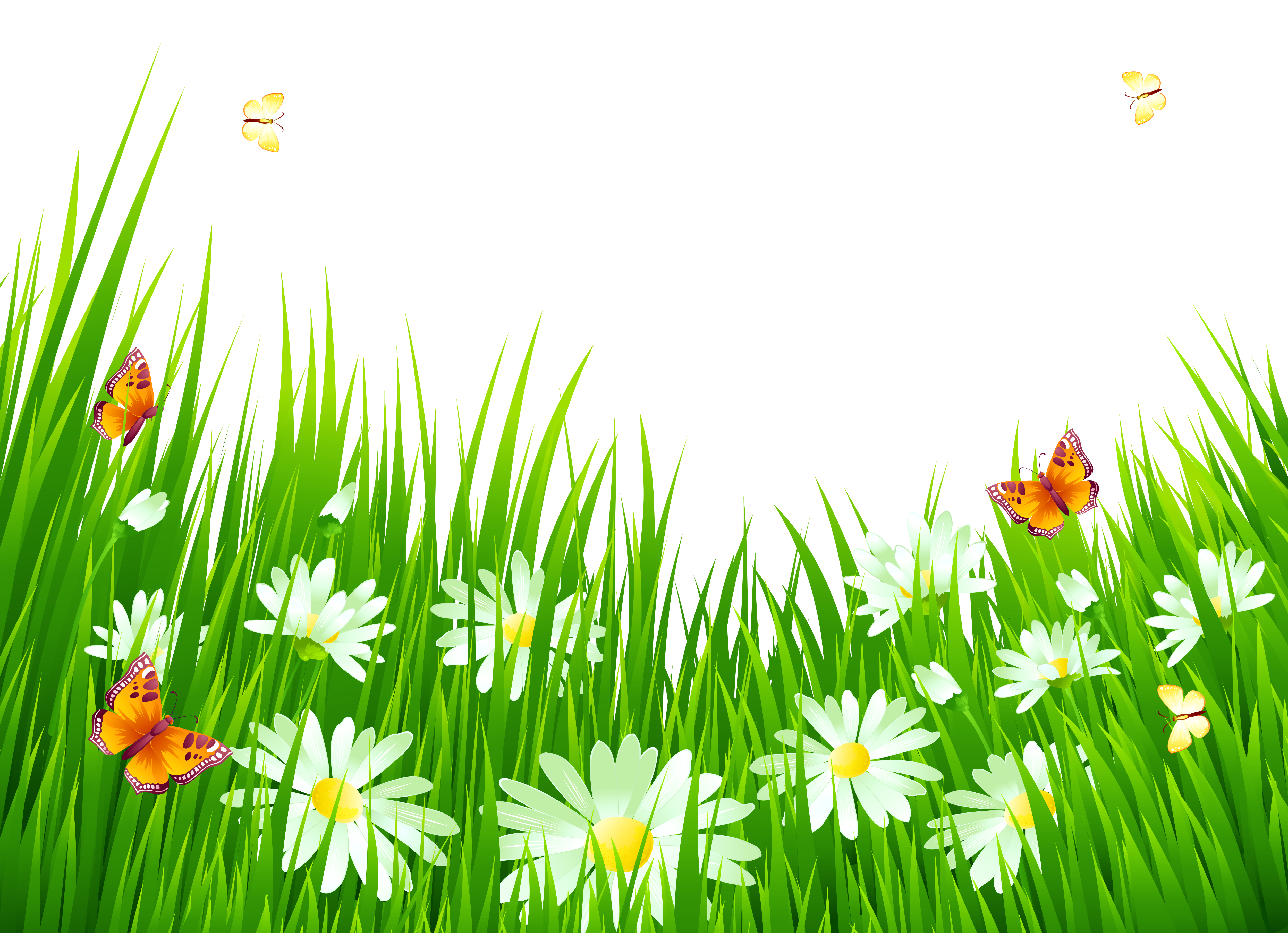 Flower clipart grass. With white flowers png