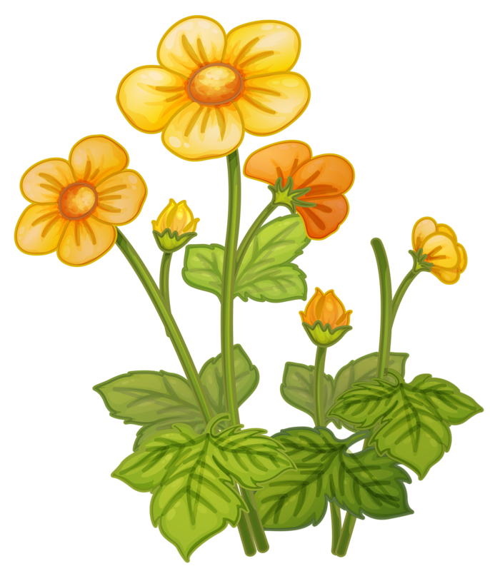 Flower clipart house.  png pinterest and