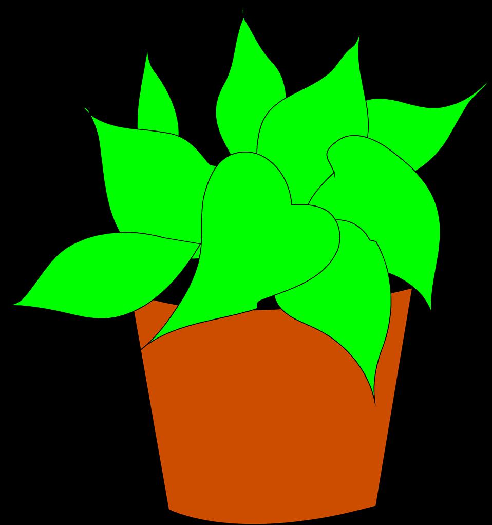 Plants clipart house plant. Free stock photo illustration