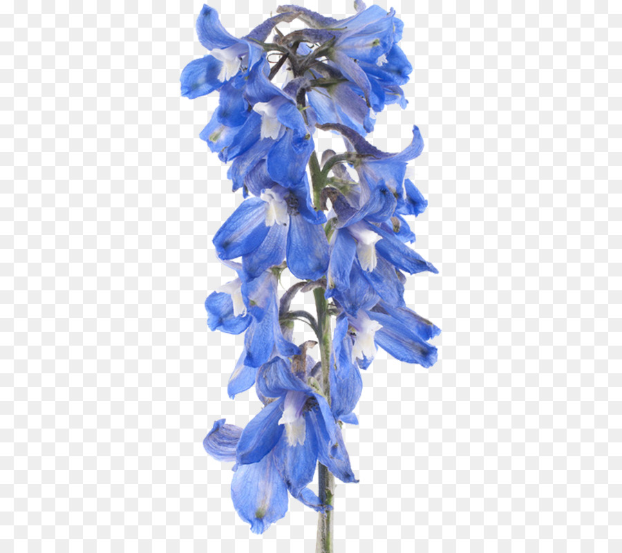 Background png download free. Flowers clipart larkspur