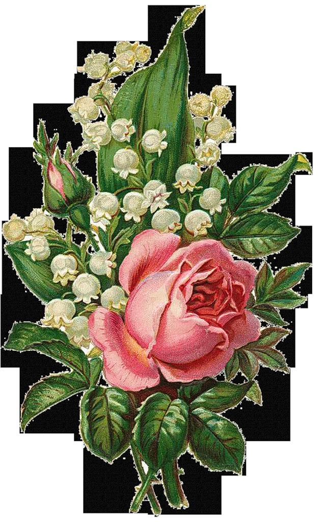 Art vintage liveinternet roses. Flowers clipart larkspur
