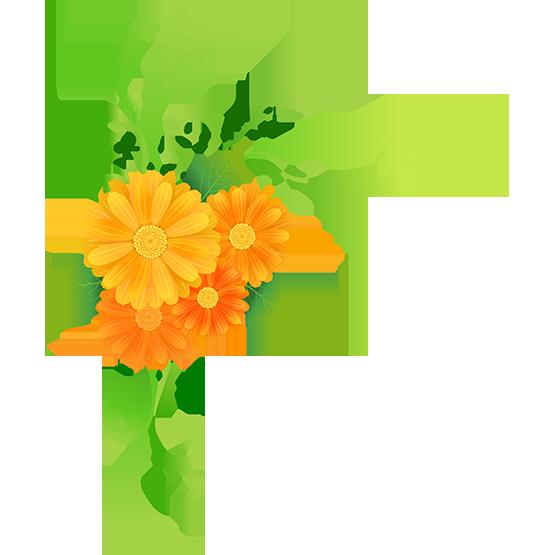Tubes fleurs bouquets borders. Mayflower clipart colour flower