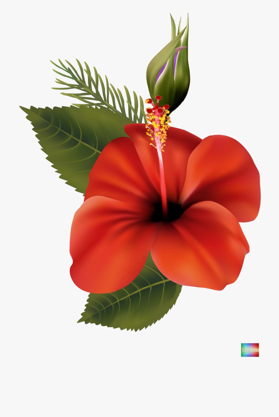 Shoe hawaiian free . Hibiscus clipart cartoon