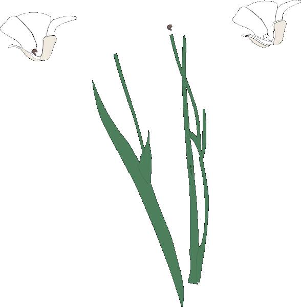 White flowers clip art. Flower clipart stems