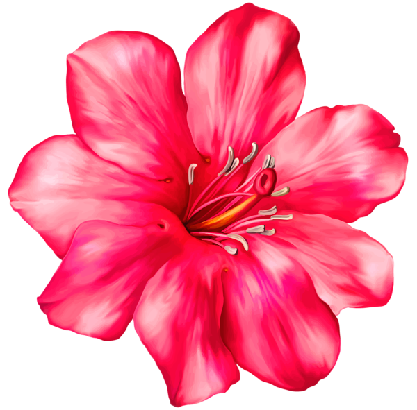 Exotic pink png picture. Poppy clipart solid flower