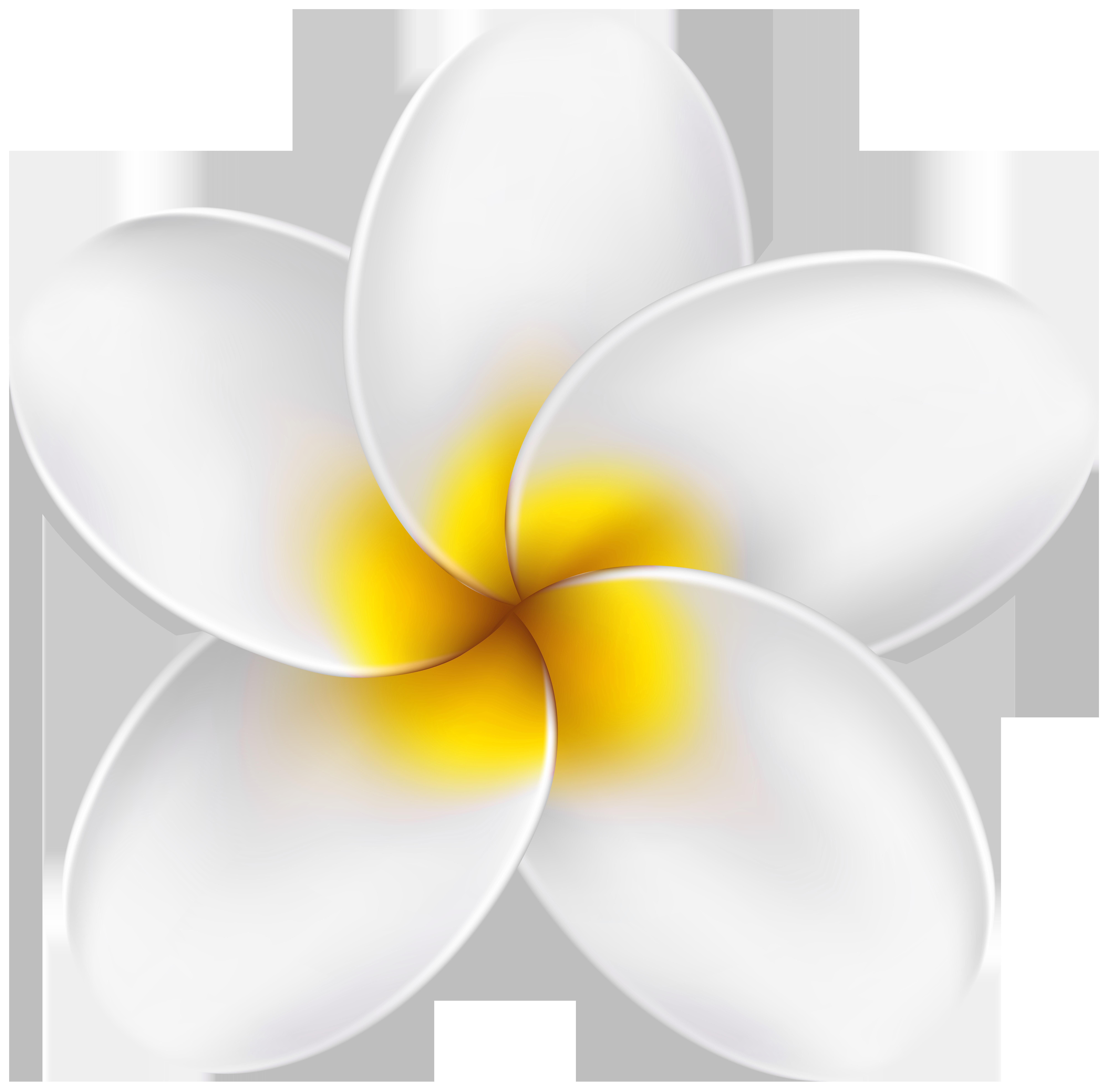 Flower clipart tropical. Clip art png image