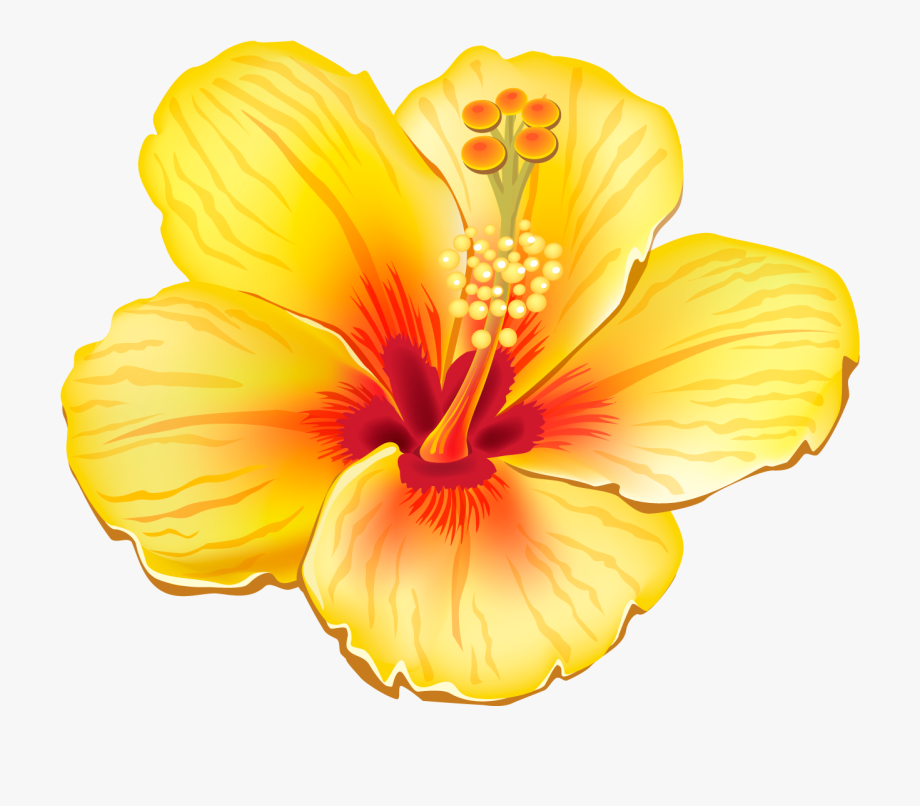 Moana clipart exotic flower. Hibiscus tropical flowers