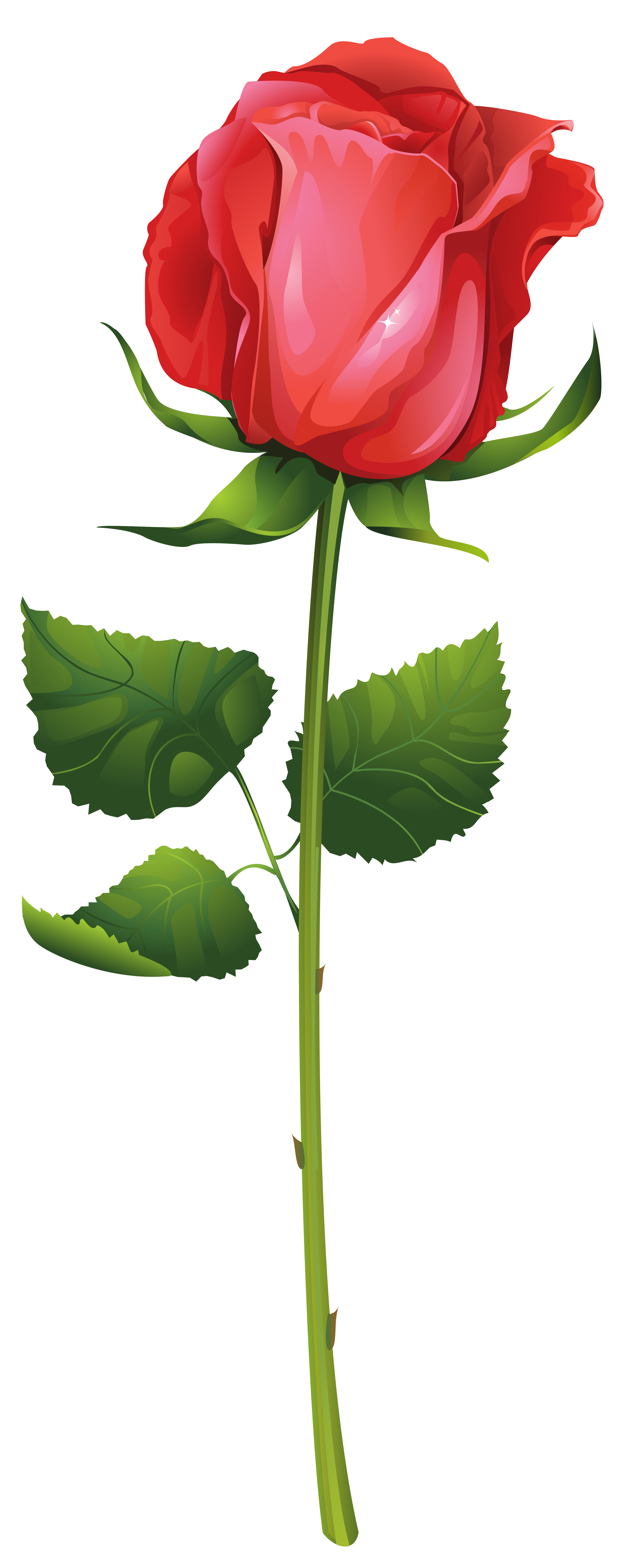 Rose with clip art. Flower stem png