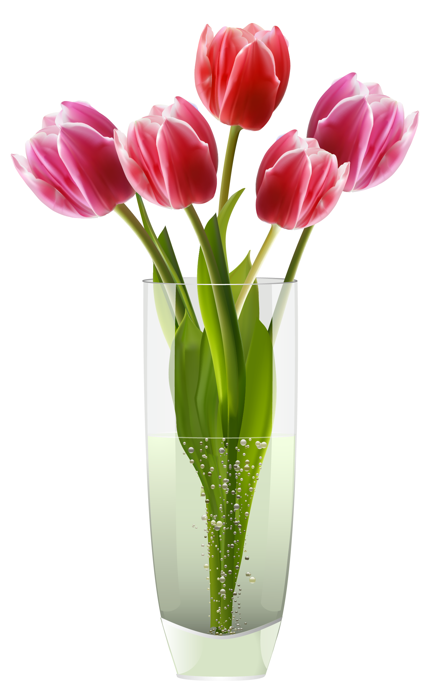 Pink red tulips clipart. Flower vase png