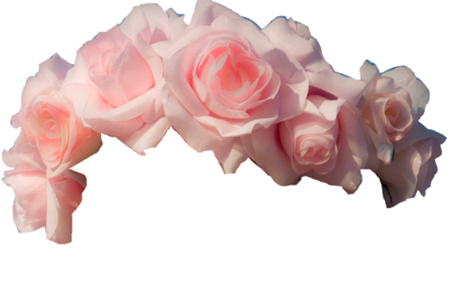 Tumblr flower crown png. Light pink roses transparent