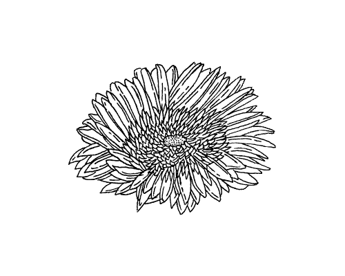 Flower drawing png tumblr. Image n ec osv