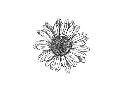 Black and white flowers. Flower drawing png tumblr