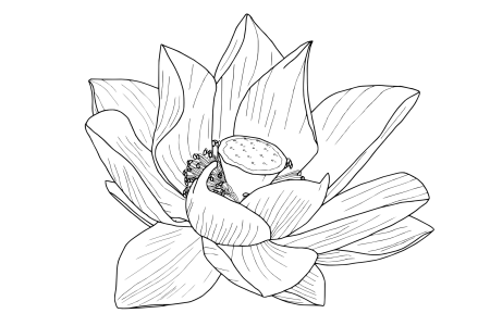 Flower drawing png tumblr. Best wild flowers transparent