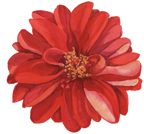 collection of high. Flower drawing png tumblr