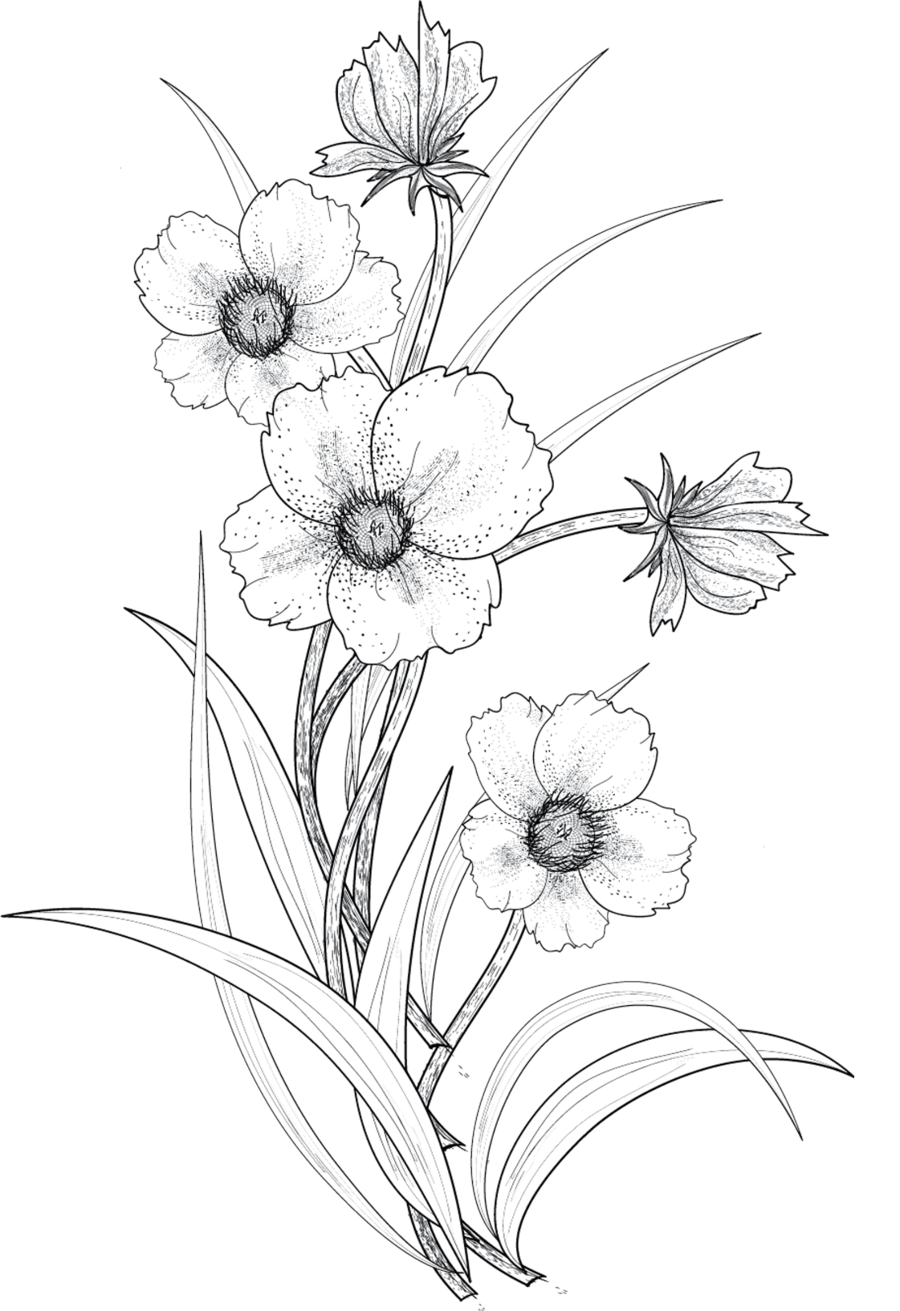 Flower drawing png. Flowers by roula deviantart